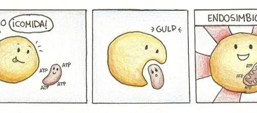 """Ilustración de """"La Ciencia por Gusto"""" sobre la endosimbiosis"""