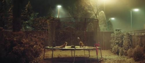 John Lewis Christmas advert: Buster the Boxer soft toy now on sale ... - chroniclelive.co.uk