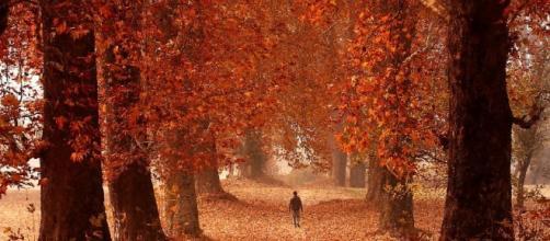 E' la stagione del foliage, perché ci conquista il mondo delle ... - repubblica.it