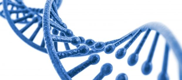 Estudios de ADN: Diferencias entre un estudio anónimo y uno con ... - grupogamma.com