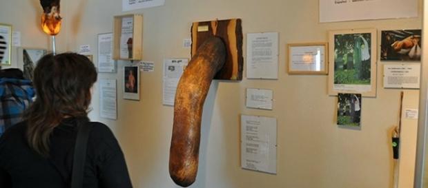 Museu expõe órgãos sexuais masculinos.