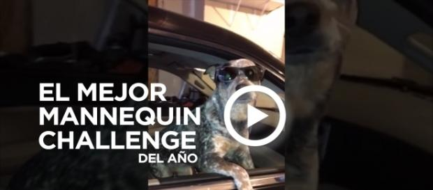 Perro haciendo un Mannequin Challenge