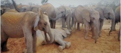 "WILD"" Saving Africa's Elphants - David Sheldrick Trust / Photo screencap via Charity Film Awards 2016"