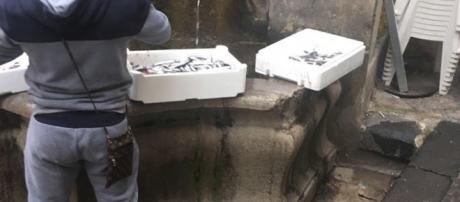Pescivendolo che lava la propria cassetta del pesce nella Fontana del Vanvitelli.
