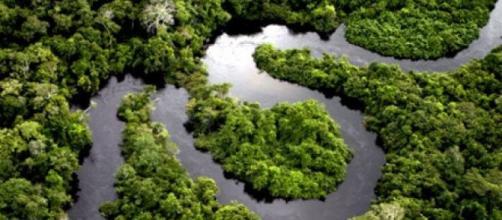 Biodiversidade da Floresta Amazônica.