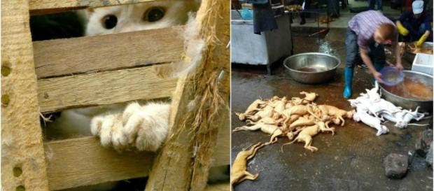 Join Us In The Fight Against The Yulin Dog Meat Festival. Sign the ... - animaldefender.org