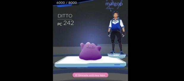 Pokémon GO: esto ocurre si utilizas a Ditto en un gimnasio pokémon