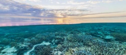 Morto circa il 67% della Grande Barriera Corallina in Australia