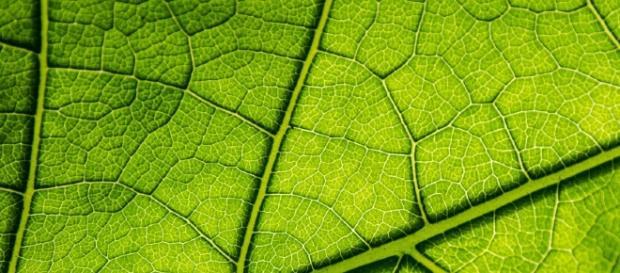 La fotosíntesis es el proceso generado por los cloroplastos de las células eucariotas vegetales.