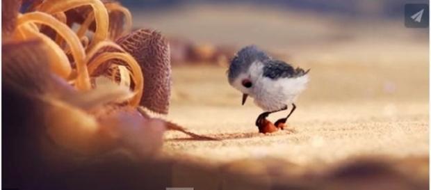 Pixar's Piper / Photo screencap via Vimeo.com