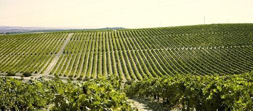 Además de usarse en la cabina, los rayos UVA ofrecen una mejora inocua y muy saludable a los viñedos