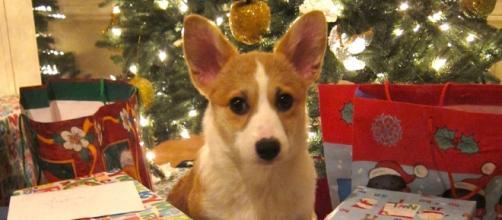 Donate to shelters for Christmas Photo: Flickr.com https://www.flickr.com/photos/jurvetson/6566587181 Steve Jurvetson