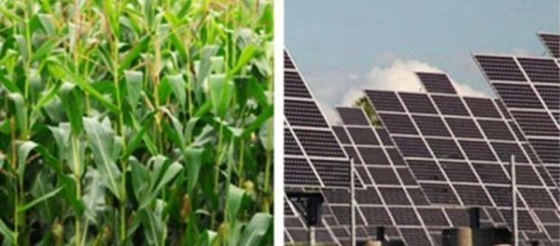 Are plants more efficient than solar panels?.... - tgdaily.com