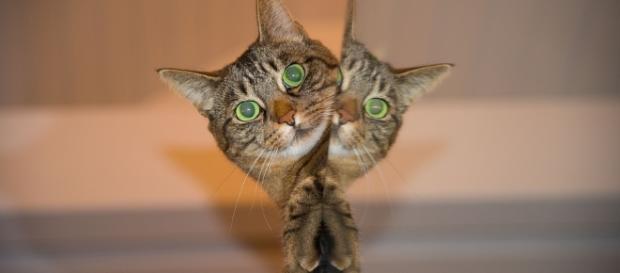 Pisici comportament explicatii - ziare.com
