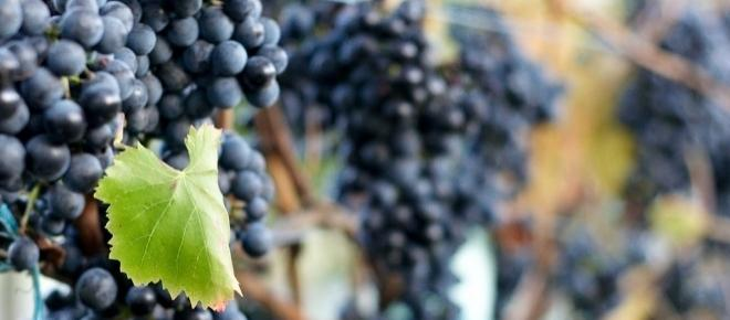 Wein aus Italien – Trentino & Südtirol   Teil 4