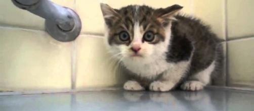 El lema de todo gato es: Agua no porfavor!!