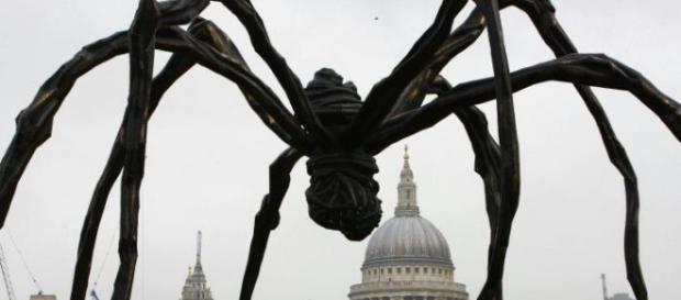 Charlotte è il nome del ragno che impazza sul web