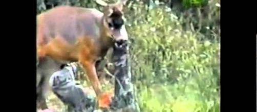 Deer Attacks Hunter. Photo: Blasting News Library- YouTube - youtube.com