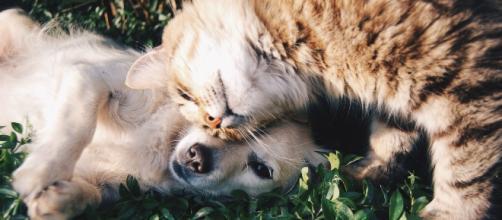 Os benefícios de ter um animal de estimação