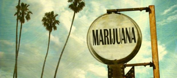 In California promossa legalizzazione della cannabis per uso ricreativo - lafogliamagazine.it