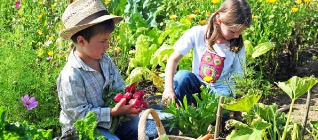 Recommandation : Jardiner sans pesticides