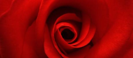 roses | AntiquityNOW - antiquitynow.org