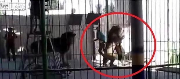 Leão ataca treinador em apresentação - Imagem/Youtube