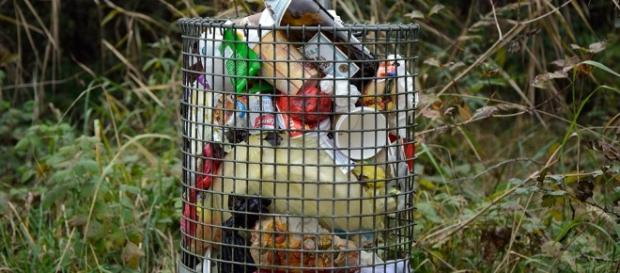 Lixo acumulado e reservatórios de água podem virar criadouros de mosquito