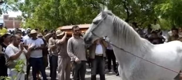 Cavalo teve reação inesperada durante velório do dono na Paraíba