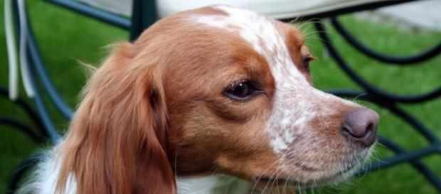 Moncalieri: uccisi quattro cani - myblog.it
