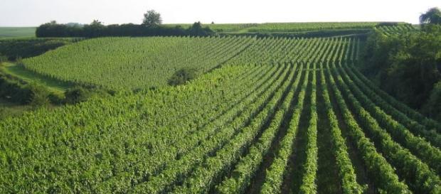 Agricultura a fost reorganizata profund în Imperiul Tarist