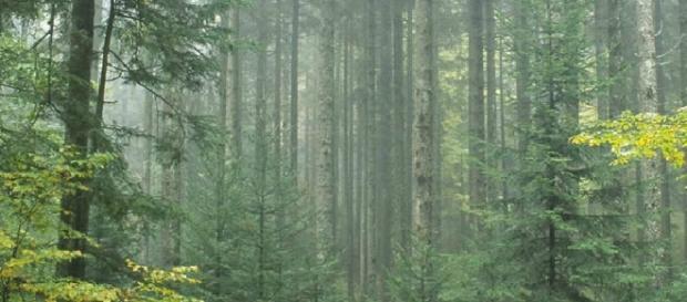 Des bûcherons ont fait une macabre découverte dans une forêt du Jura