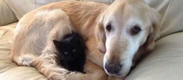 Todos os anos cães e gatos encantam a internet com suas travessuras e momentos fofos. Na foto, Forsberg e seu novo amigo gato, Maxwell.