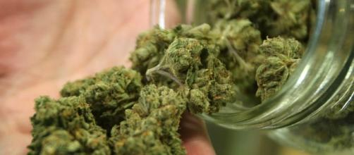 La marijuana arriva nelle farmacie dal prossimo 1° gennaio