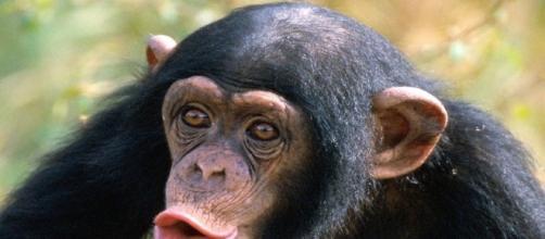 mono pueden hablar pero no saben