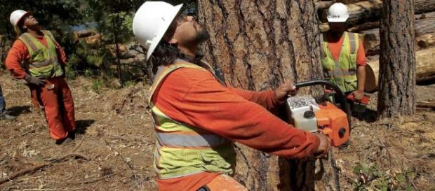 California, albero di eucalipto cade e uccide anziana
