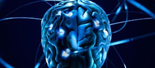 Sicuri che esistano cervelli maschili e femminili? - Wired - wired.it