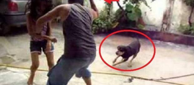 Cão protege a dona de suposto padrasto alcoolizado - Google
