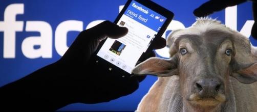 Le bufale create ad arte da specialisti della disinformazione sono diffuse a piene mani su Facebook