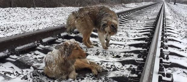 Quando o trem passava eles abaixavam a cabeça para se proteger (Foto: Reprodução)