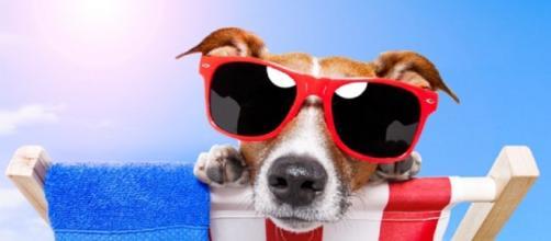 Cuidados com o seu animalzinho no verão