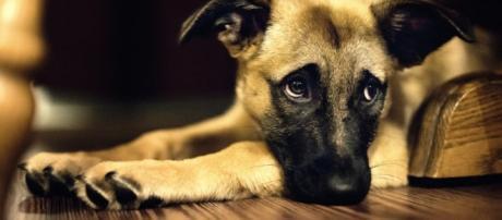 Meu Cachorro Está Lambendo as Patas - Meu Amigo Dog - com.br