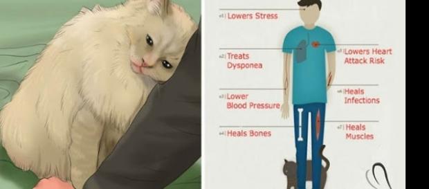 De acordo com pesquisas o ronronar dos gatos faz bem para a saúde