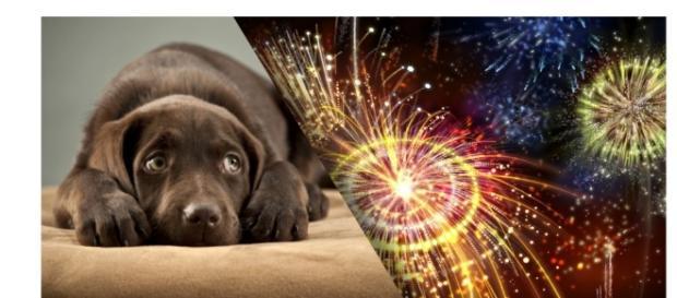 Virada de ano é uma das épocas mais difíceis para os cães, pois eles morrem de medo dos fogos de artifício