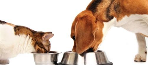 L'alimentazione di cani e gatti: i miti da sfatare. Ecco come ... - ilpiacenza.it