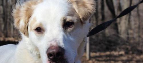 Casey, a dog who endured violent abuse, overcomes injury. (Photo via Partners 4 Pets Facebook)