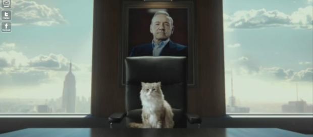 Una vita da gatto e Tom Brand, in uscita il 07/12
