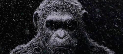 Andy Serkis retorna como César, o líder dos macacos inteligentes (divulgação)