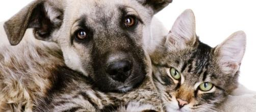 L'importanza di cani e gatti nella vita dell'uomo: lo dice anche la ricerca.