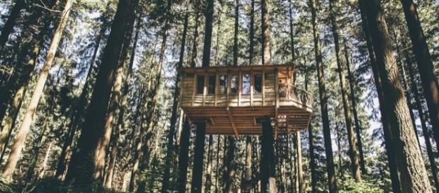 Duerme En Lo Alto De Los Arboles - Cabaas-de-madera-en-arboles